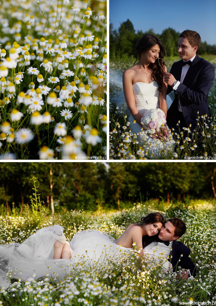 sesja ślubna tarnów